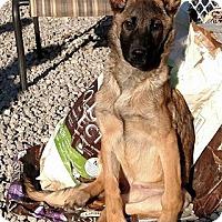 Adopt A Pet :: RAINE - WOODSFIELD, OH