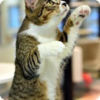 Adopt A Pet :: Ralphy - Aiken, SC