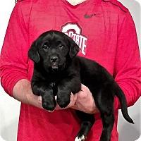 Adopt A Pet :: Marshall - Gahanna, OH