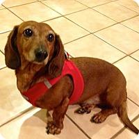 Adopt A Pet :: Spencer - Orangeburg, SC