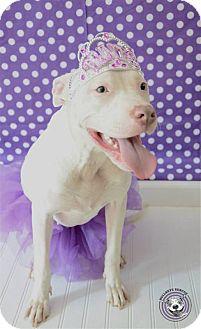 Terrier (Unknown Type, Medium) Mix Dog for adoption in Atlanta, Georgia - Bindi