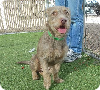 Terrier (Unknown Type, Medium) Mix Dog for adoption in Phoenix, Arizona - Hana