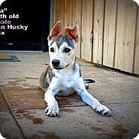 Adopt A Pet :: Dela - Gadsden, AL