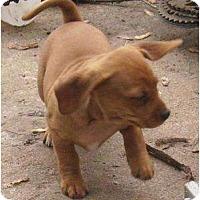 Adopt A Pet :: Dutch - Glenpool, OK