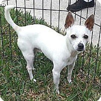 Adopt A Pet :: Chango - Orlando, FL