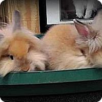 Adopt A Pet :: Julia and Dorrie - Williston, FL