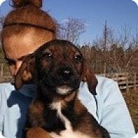 Adopt A Pet :: Lil Man - Marlton, NJ