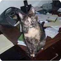 Adopt A Pet :: Trudy - Hamburg, NY