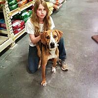 Adopt A Pet :: Slim - Midlothian, VA