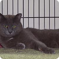 Adopt A Pet :: Harley - East Brunswick, NJ