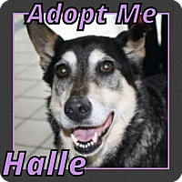 Adopt A Pet :: Halle - Cheney, KS