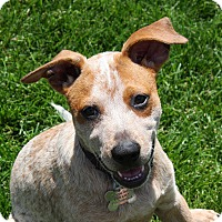 Adopt A Pet :: Red - Delano, MN