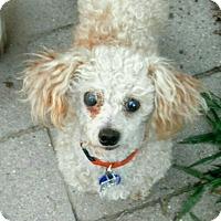 Adopt A Pet :: Reese - Lansing, MI