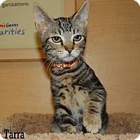 Adopt A Pet :: Tarra - Buena Park, CA