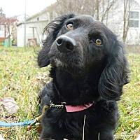 Adopt A Pet :: Maddie - ROME, NY