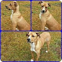 Adopt A Pet :: Murray - Mary Esther, FL