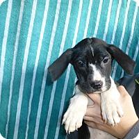 Adopt A Pet :: Leigh - Oviedo, FL