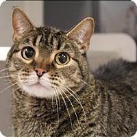 Adopt A Pet :: Jimmy - Topeka, KS