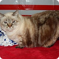 Adopt A Pet :: Dusty - Old Fort, NC