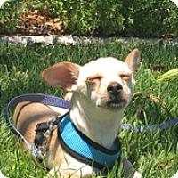 Adopt A Pet :: Courage 1 - Las Vegas, NV