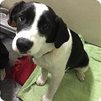 Adopt A Pet :: Nala - Neosho, MO