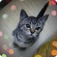 Adopt A Pet :: Cammy - Trevose, PA