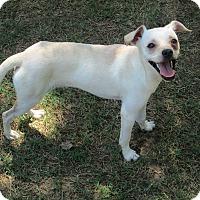Adopt A Pet :: Kobe - Gadsden, AL