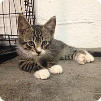 Adopt A Pet :: Tiburan - River Edge, NJ