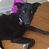 Adopt A Pet :: Boomer - Manhattan, KS
