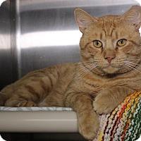 Adopt A Pet :: Jack Sparrow - Middletown, CT