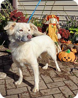 Spitz (Unknown Type, Medium) Mix Dog for adoption in West Chicago, Illinois - Nicola