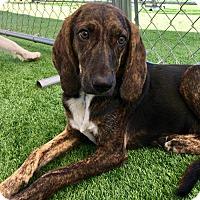 Adopt A Pet :: Matilda - Garner, NC