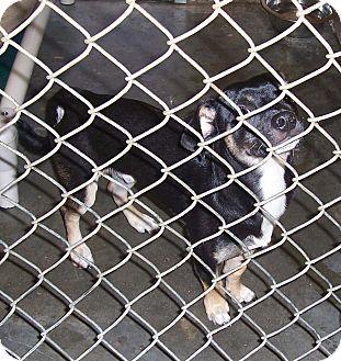 Dachshund Mix Dog for adoption in Fall River, Massachusetts - Jambo