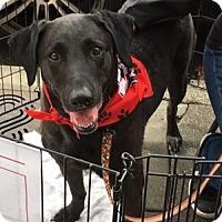 Adopt A Pet :: Sierra - San Francisco, CA
