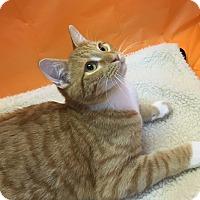Adopt A Pet :: Peanut - Butner, NC