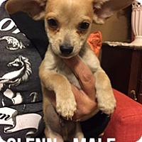 Adopt A Pet :: GLENN - Glendale, AZ