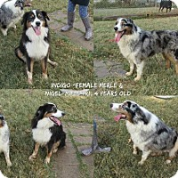 Adopt A Pet :: Nigel - Ponca City, OK