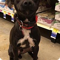 Adopt A Pet :: DEWEY - Katy, TX