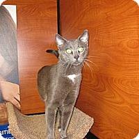 Adopt A Pet :: Grant - Farmingdale, NY
