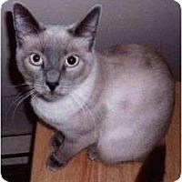 Adopt A Pet :: Sue - Prescott, AZ