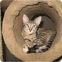 Adopt A Pet :: Bindie - Phoenix, AZ