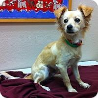 Adopt A Pet :: Reeses - Gilbert, AZ