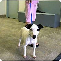 Adopt A Pet :: Paige in Houston - Houston, TX