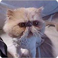 Adopt A Pet :: Danny - Beverly Hills, CA