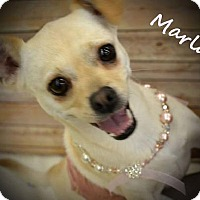 Adopt A Pet :: Marla - Killian, LA