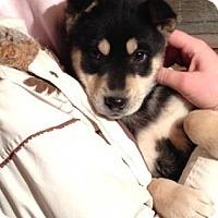 Adopt A Pet :: Venus - Saskatoon, SK
