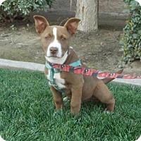 Adopt A Pet :: Saffron - Bakersfield, CA