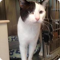 Adopt A Pet :: Keanu - La Jolla, CA