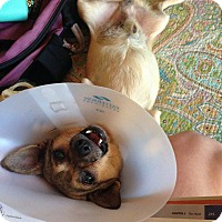 Adopt A Pet :: Pete aka Torch - Gainesville, FL