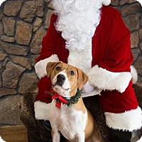 Adopt A Pet :: Molly - Munford, TN
